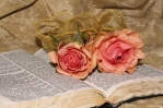 rosa con libro