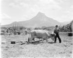 Trilla en Etxarri-Aranatz